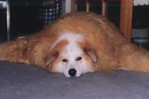 1989-7-6才毛皮を着た犬.jpg