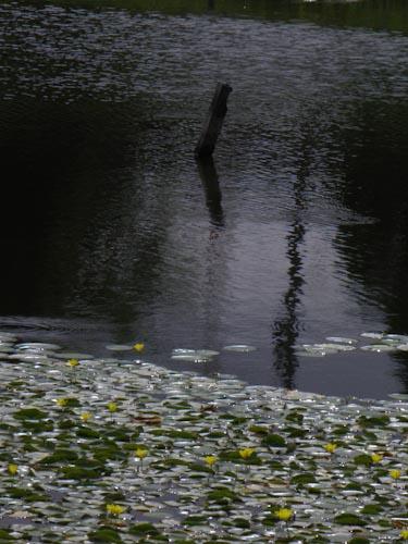 P8290009.jpg